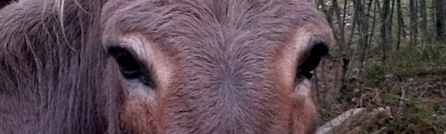 les yeux de Bichette